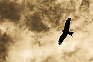 Birdflying