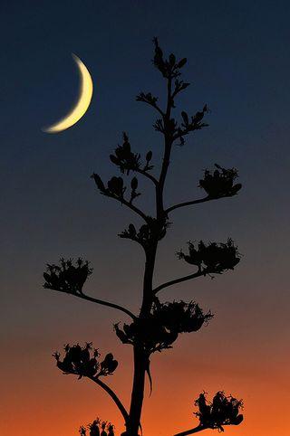 Nightskypres