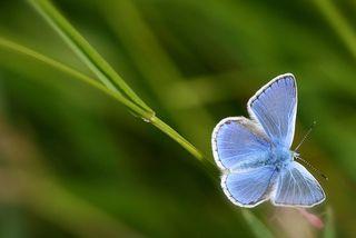 Bluebutter2