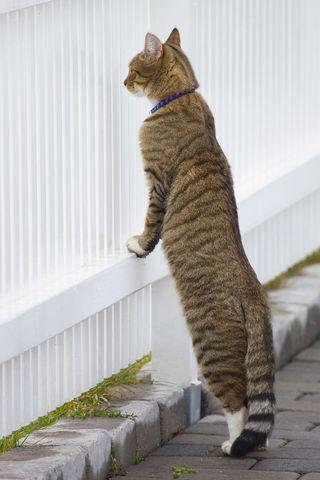 Cat3ev