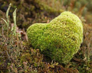 Mossheart