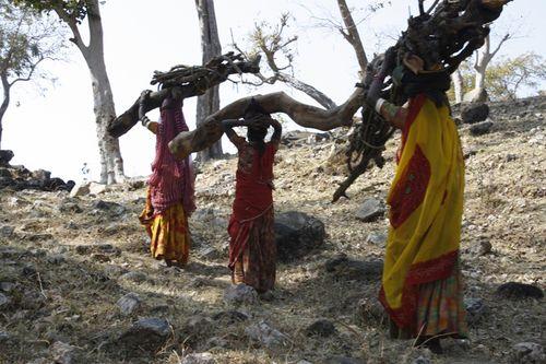 Deforestation, India
