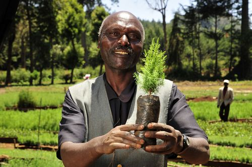 Reforestation, Kenya